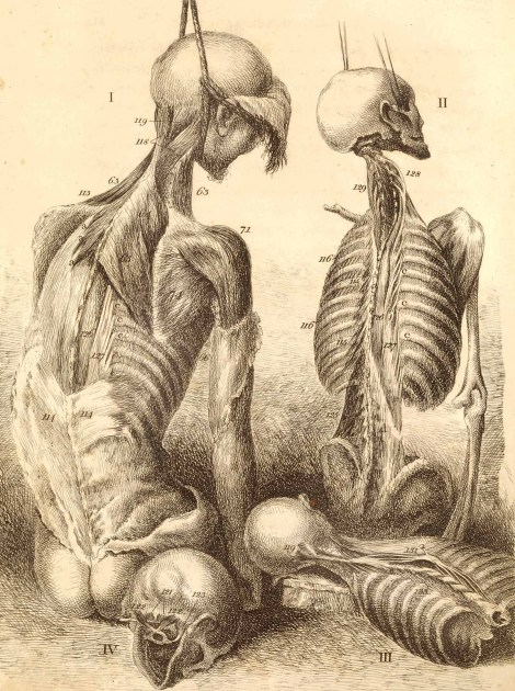 John Bell (1763-1820) [anatomist; artist], Engravings of the bones, muscles, and joints, illustrating the first volume of the Anatomy of the Human Body. 2d ed.; London, 1804