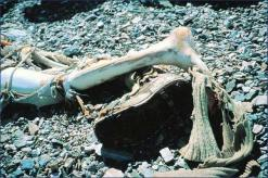 The Frozen Leg of George Mallory, via Giles Milton Surviving History
