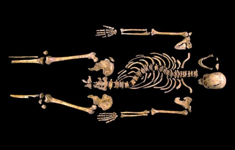 Skeleton of Richard III, via Wolf Gang on Flickr