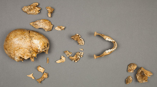 Remains of the Jamestown girl, via Smithsonian Institution / Don Hurlbert
