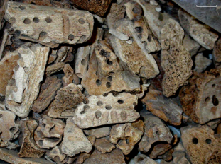 Fragmentary human skeletal remains recovered from Tomb E1, Jericho, via Huchet et al. (2013)