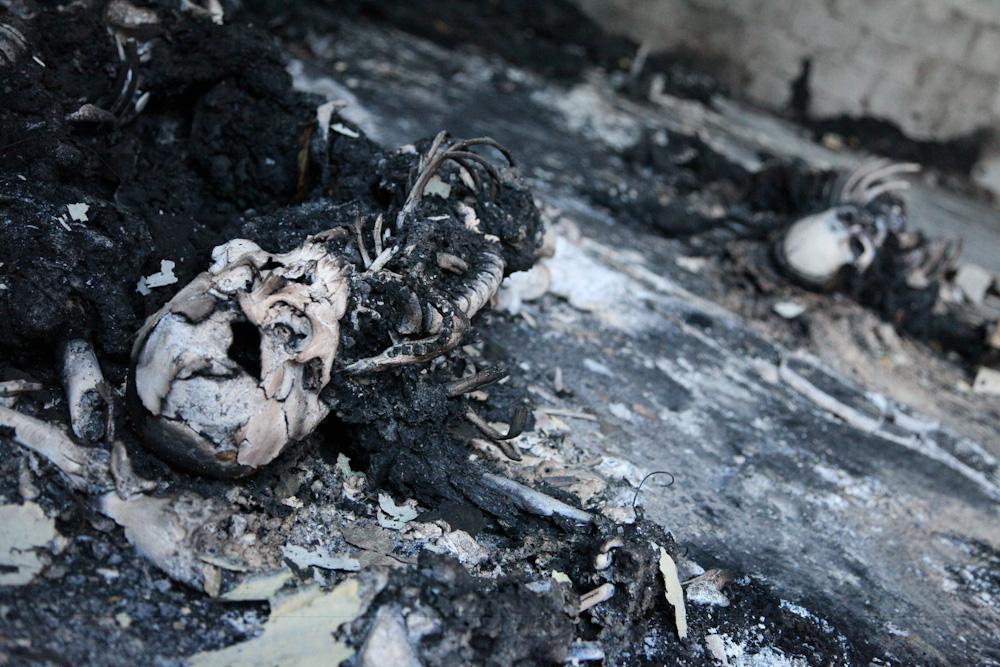 Image Result For Skull On Fire
