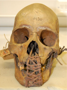 Skull from Hose's collection of trophy skulls, via Okumura and Siew (2013)