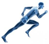 Running skeleton, via Cat Core
