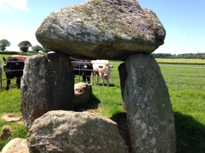 Bodowyr Dolmen (with bulls in background)
