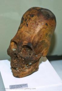 Paracas Elongated Skull... Human Skull... Not Alien. Via Bad Archaeology.