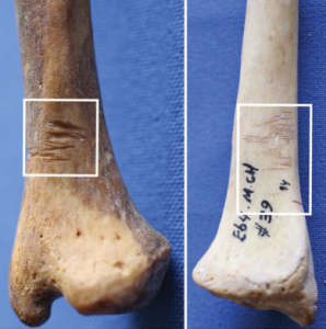 Cut marks on long bones from the site, evidence of dismemberment, via Tung 2015