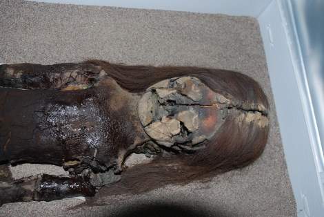 Chinchorro mummy showing signs of decay- black bacterial ooze. via Livescience.