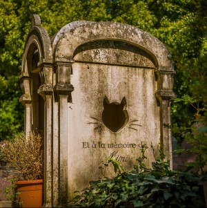 Photo of a cat burial from France by Tommie Hansen