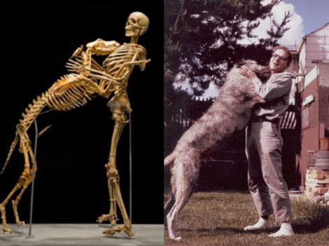 Grover Krantz and Clyde, in life and death. Via Smithsonian Mag.