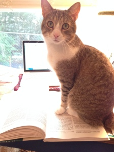 Help out a PhD student... unlike my cat, Gouda, who definitely is not helping a PhD student.