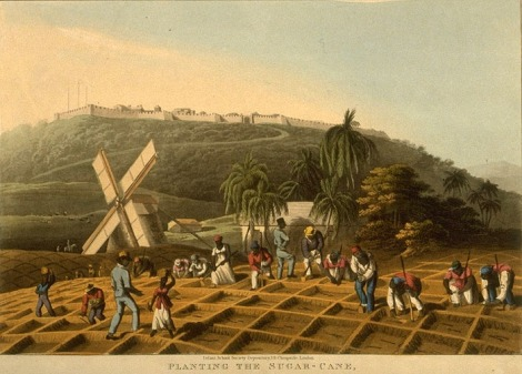 Planting of Sugar Cane in Jamaica, William Clark from 1823 which depicts slave planting sugarcane on a plantation. Via Douglas et al. 2005