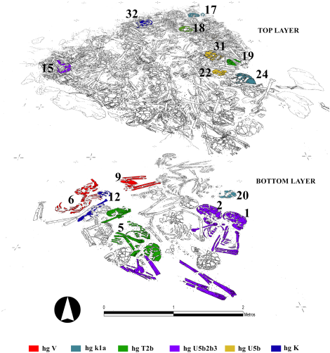 Fig 3 from Alt et al. (2016) Superposition of different layers of the Neolithic ossuary indicating the individuals with the same genetic profile (graphic: Héctor Arcusa Magallón).
